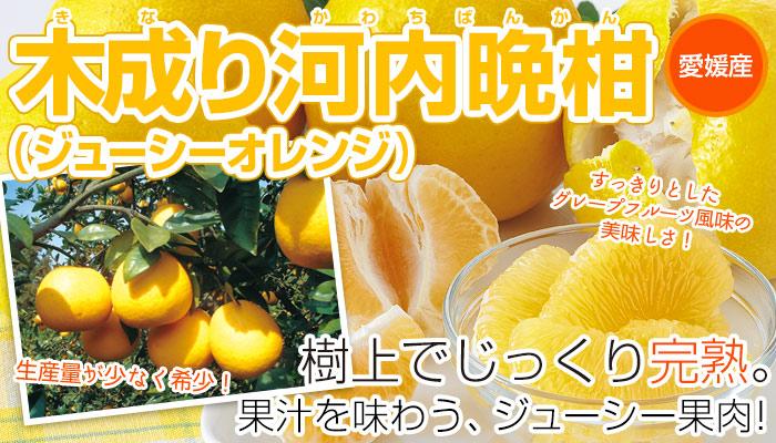 木成り河内晩柑(ジューシーオレンジ)