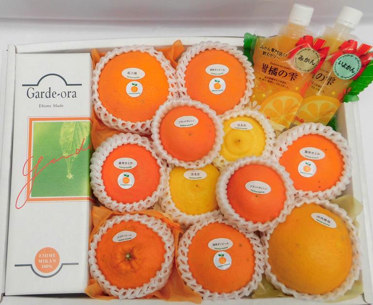 柑橘よくばりセット