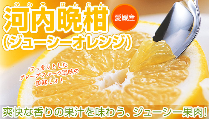 河内晩柑(ジューシーオレンジ)