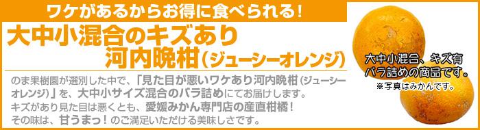 ワケあり河内晩柑(ジューシーオレンジ)