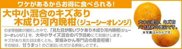 ワケあり木成り河内晩柑(ジューシーオレンジ)