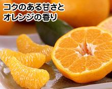 1月ポンカンオレンジ