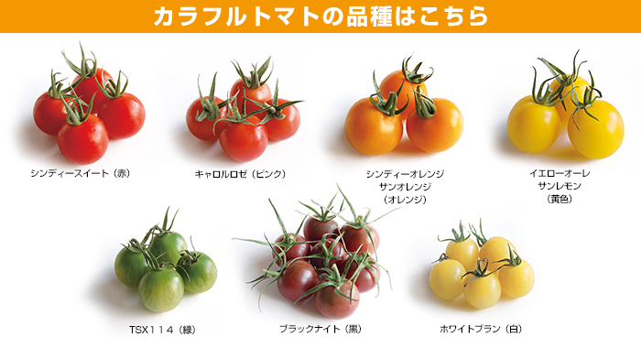 カラフルトマト・ミディフル